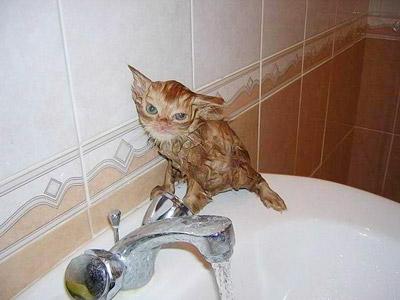 Banho em domicilio - gato
